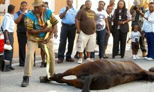 Horse dies in city street, Nassau Bahamas